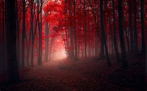Nature, Landscape, Trees, Fall, Red, Path, Leaves, Mist, Forest, Sunrise, Sunlight, Wallpapers, Hd