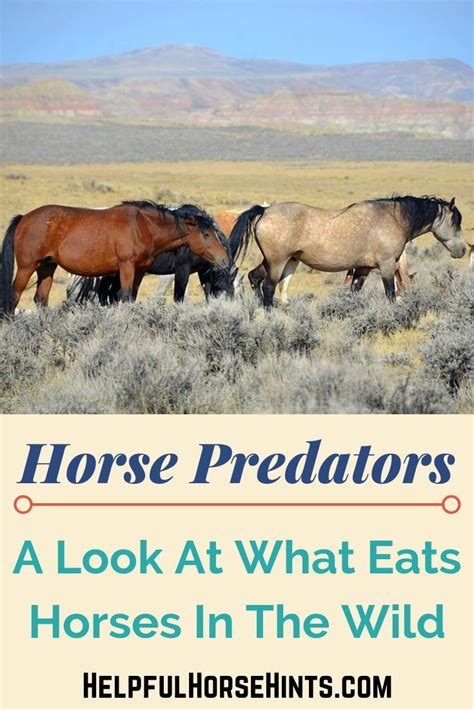 horses predators prey horse animals wild
