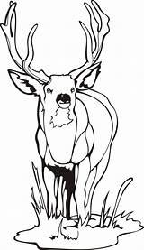 Elk Coloring Pages Bull Printable Getdrawings sketch template