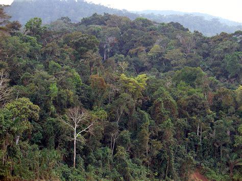 amazing amazonia amazon rainforest  pics