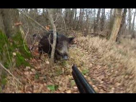 compilation chasse aux sanglier cerfs daim 2016 2017