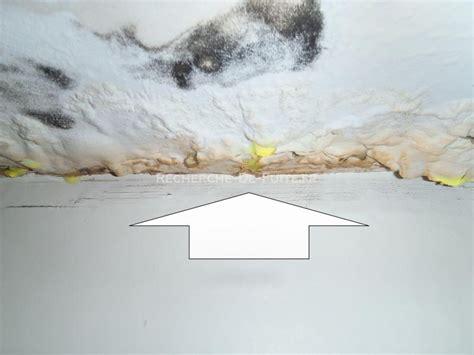 moisissure tapisserie chambre moisissure mur chambre affordable moisissure sur pltre de