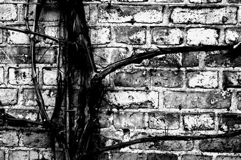 black and white file black and white branch jpg wikimedia commons