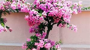 Best Pot Plants for Sun and Shade - Burke's Backyard