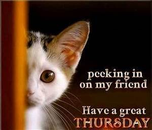 Have a great Thursday quotes cute quote kitten days of the ...