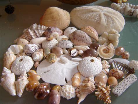chambre hote ile en mer le musée du coquillage et de la mer