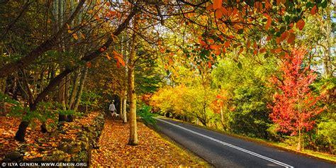 autumn avenue  mount wilson  blue mountains