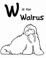 Coloring Walrus Printable Animal Letter Animals Zoo Alphabet Morse Moms Being Clipart Printables Coloriages Colouring Preschool Lilly Cane Welovebeingmoms Animaux sketch template