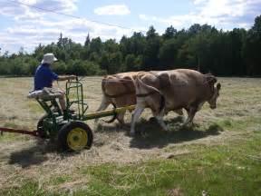 Farming Ox Pulling Equipment