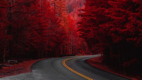 wallpaper  road turn trees red