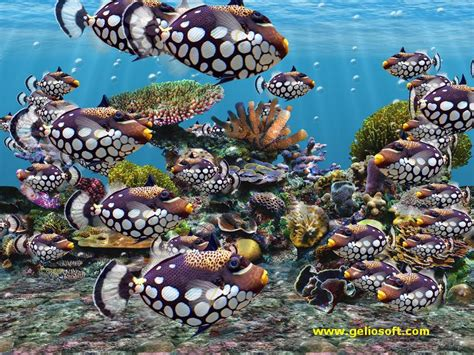 fish tank wallpaper screensavers wallpapersafari