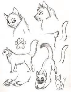 Cat Sketches and Drawings