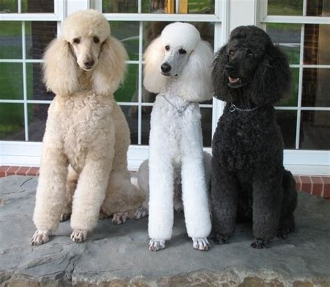 Top Ten Dog Breeds For Kids