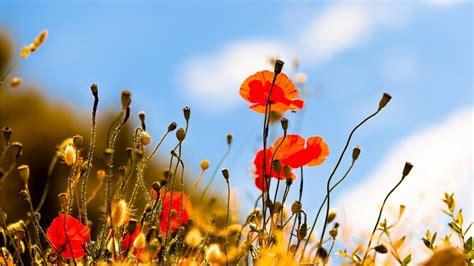 arriere plan bureau gratuit les plus beau fond ecran fleurs fond ecran pc