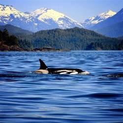 Tofino Vancouver Island Canada