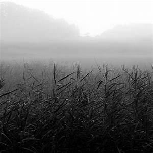 Küchenboden Schwarz Weiß : bilderwald landschaftsfotografie in schwarzweiss oder doch farbig ~ Sanjose-hotels-ca.com Haus und Dekorationen