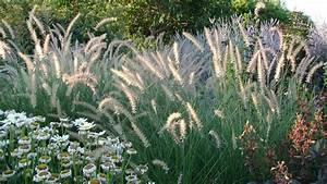 Gräser Für Garten : ziergr ser f r den garten tipps und sorten ~ Lizthompson.info Haus und Dekorationen