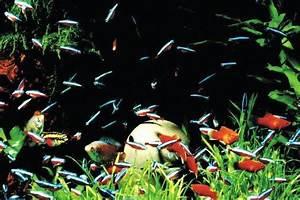 Sauerstoff Im Aquarium : der wasserwechsel im aquarium 11 tipps zur pflege ~ Eleganceandgraceweddings.com Haus und Dekorationen