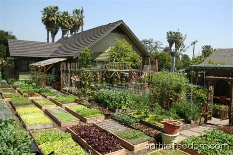 Self Sufficient Backyard by 60 000lbs Of Organic Food Per Acre Grid World