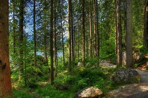 Forest, Germany, Bavaria, Trees, Nature, Hdr, Wallpaper