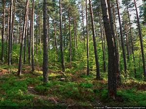 Foret à Bois : arbres foret france ~ Nature-et-papiers.com Idées de Décoration