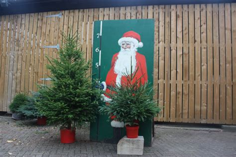 3ft real tree at lowes 3ft potted spruce