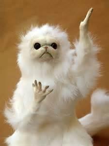white cat meme meme template search imgflip