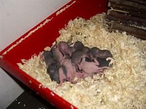 Ratte Im Haus : ratten im garten was tun finest fabulous ratten im garten was tun with ratten im garten was tun ~ Buech-reservation.com Haus und Dekorationen