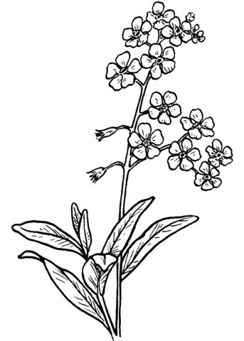 forget   coloring page  printable coloring pages