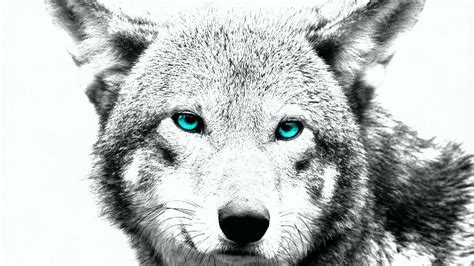 Wolf Drawing Wallpaper by Wolf Wallpapers Wallpaper Cave