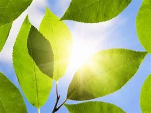 Was Brauchen Pflanzen Zum Wachsen : wieso wachsen pflanzen ohne licht nicht ~ Frokenaadalensverden.com Haus und Dekorationen