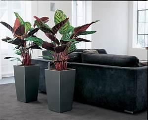 Pot Pour Plante Intérieur : un calathea dans un pot lechuza plantes vertes xxl pinterest oxygene plante interieur et ~ Melissatoandfro.com Idées de Décoration