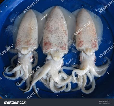 fresh squid market stock photo  shutterstock