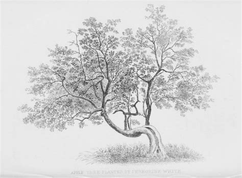 realistic apple tree drawing realistic apple tree drawing