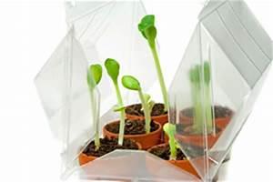 Mini Gewächshaus Selber Bauen : zimmergew chshaus selber bauen und bepflanzen ~ Markanthonyermac.com Haus und Dekorationen