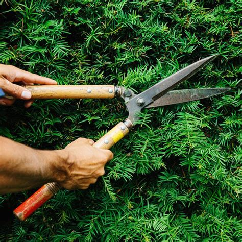 okatsune japanese pruning shears the worm that turned