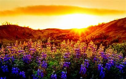 Sunset Summer Landscape Scenery Nature Background Wallpapers
