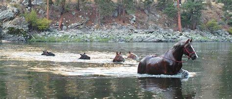 salmon river lodge resort llc horsesinriver 10 6 10 20