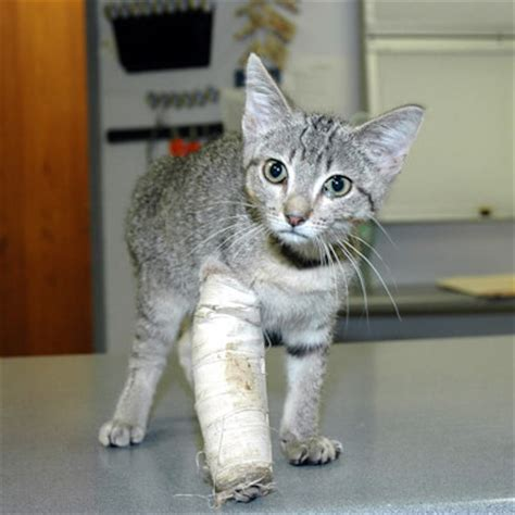 Do vets accept pet insurance? Pet Insurance For Your Cat - Forest Veterinary Clinic