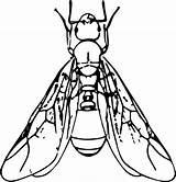 Ant Clipart Termite Coloring Winged Insect Drawing Ants Wings Clip Termites Transparent Icons Outline Webstockreview Wikiclipart Resolution Collection Downloads Recent sketch template