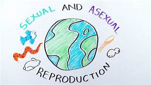 Types Of Reproduction  Sexual Versus Asexual Reproduction - Ibiology  U0026 Youreka Science