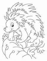 Porcupine Coloring Balancing Printable Colouring Sheets Lesson Animal Printables Porcupines Popular sketch template