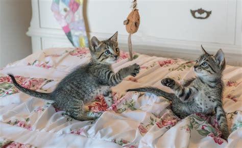 Katze Kleine Wohnung by Wie Viel Arbeit Macht Eine Katze Schlafen Katzen Den