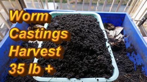 worm bin wiggler harvesting vermicompost pounds
