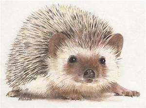 Cute Hedgehog Drawing | www.imgkid.com - The Image Kid Has It!