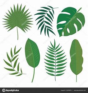 Vector set of tropical leaves. — Stock Vector © imaginasty ...