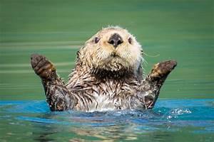 Alaska Wildlife Photography Tour