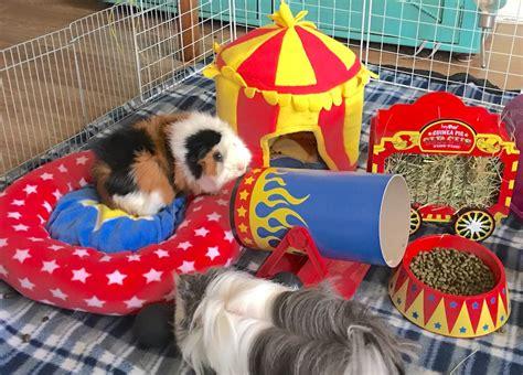 guinea pig cage accessories colourful fun circus