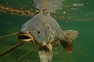 Sternzeichen Fisch Und Krebs : karpfenangeln jetzt mit fisch und krebsaromen punkten blinker ~ Frokenaadalensverden.com Haus und Dekorationen