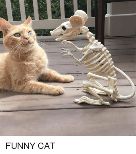 funny cat funny meme  meme
